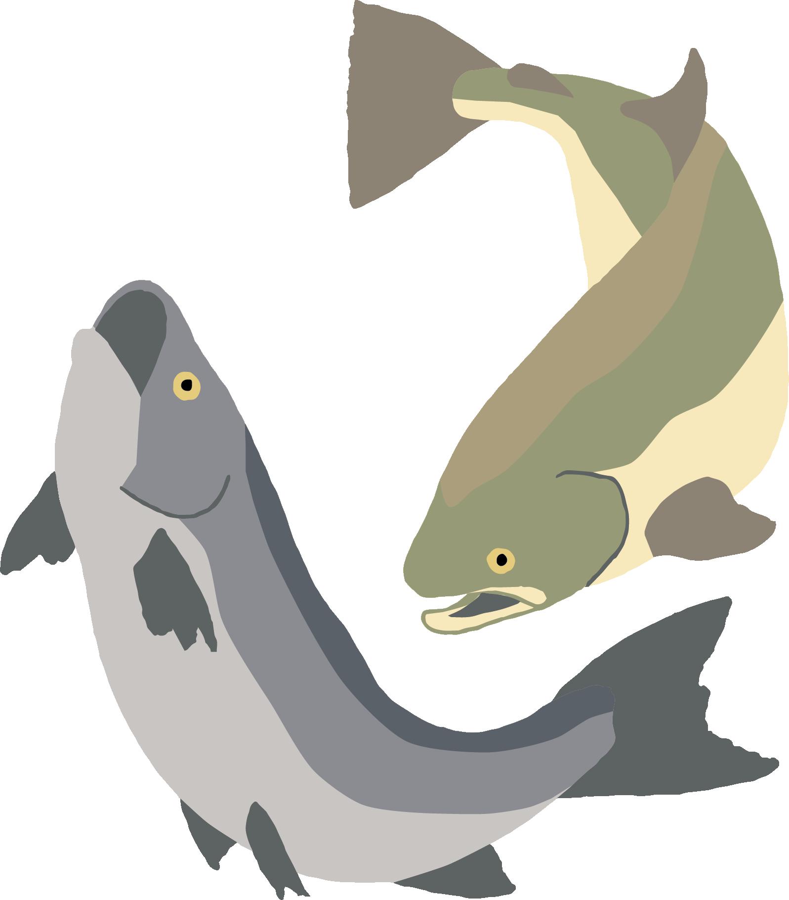 donate-fish