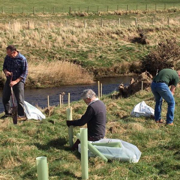 Tree planting otterburn volunteers